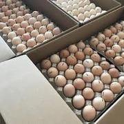 Яйца инкубационные Венгрия Польша Чехия Украина бройлер и др породы